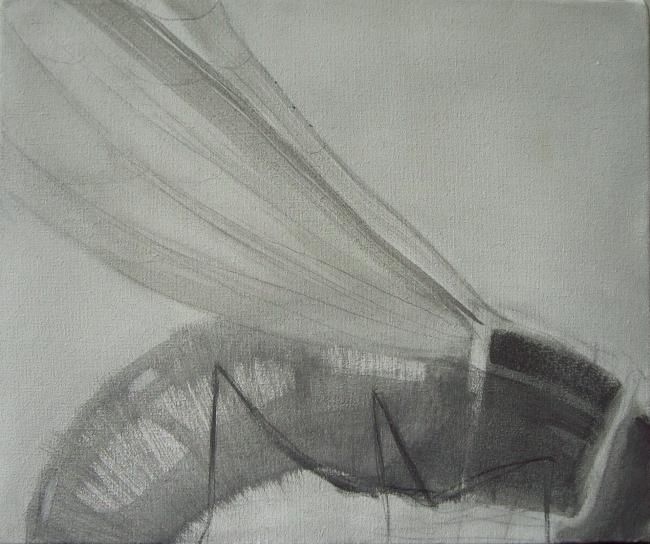 Dita Luse - Fly